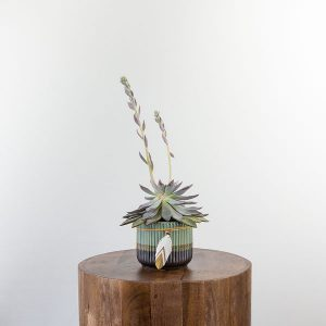 single succulent planter, by Petal and Kettle, Parksville/Qualicum Beach florist