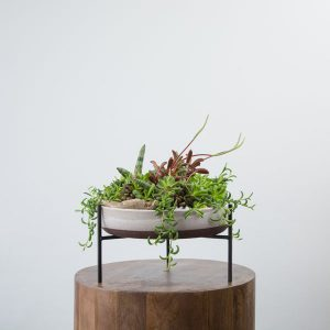 mixed succulent garden planter by Petal and Kettle, Parksville