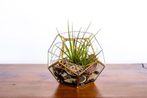 terrarium plant display from Parksville's Petal and Kettle florist